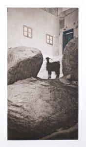"""Heliogravüre """"die nubische Ziege"""" Dorf bei Assuan 1996 21,1x39,1 (40x60) Auflage 9"""
